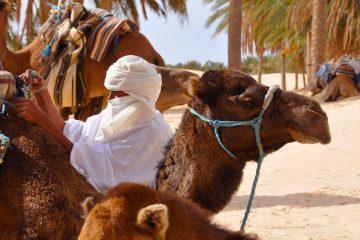 Camel train in Tunisia.